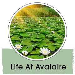Life at Avalaire
